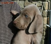 me-puppy