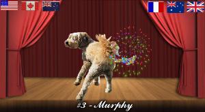 murphy#3