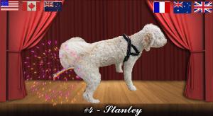 stanley#4